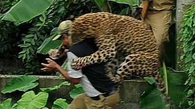 インドでヒョウが6人の村民を襲...